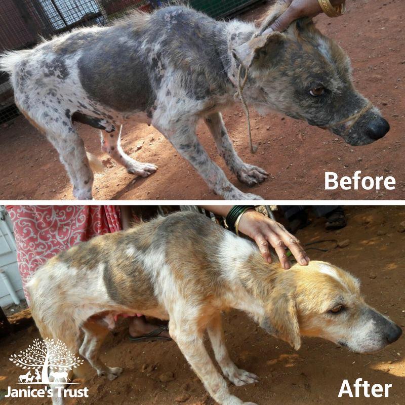 Janice's Trust_animal NGO_imact